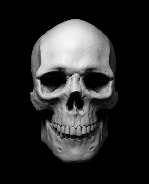 tutorial zbrush italiano tutorial sculpting the human skull on behance