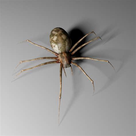 3d Realistic Spider Model 3d Spider
