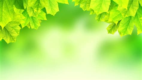 plant background plants background 2 187 background check all