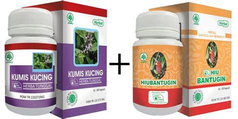 Obat Herbal Kumis Kucing cara alami mengobati batu ginjal terapi herbal penyakit