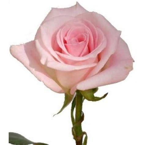 Sprei Orlando 200 X 200 X 40 Cm roses light orlando