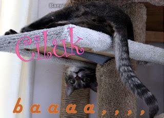Kaos Buto Ijo Kata Kata wallpaper gambar kucing dengan kata kata dunia hitam