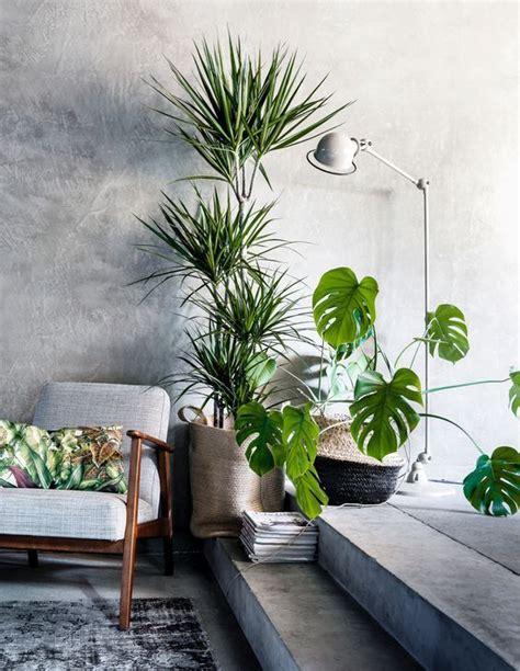 Best House Plants For Living Room 220 Ber 1 000 Ideen Zu Wohnzimmer Pflanzen Auf