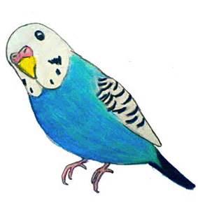Baseball Bedroom Decor Parakeet Drawing By Parakeetart