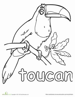 coloring page of a toucan bird toucan worksheet education com