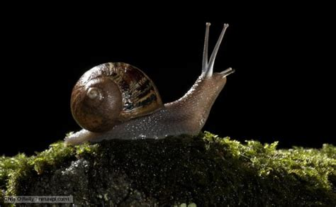 How Do Garden Snails Live by Nature Garden Snail News And Facts