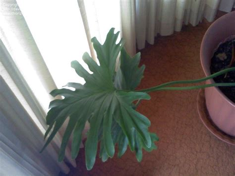 common tropical house plant identification tropical zone gardening tropical house plant id 1 by tafidler