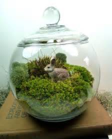 terrarium small covered vase bunny moss great for home or office terrariums by