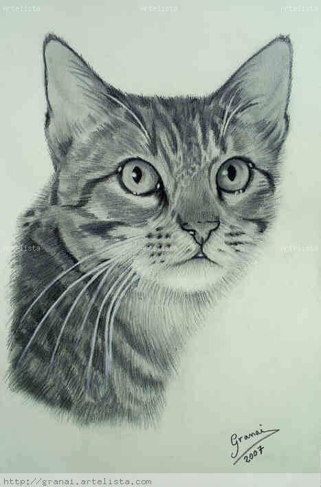 dibujos realistas a lapiz de color gatos dibujados a lapiz imagui