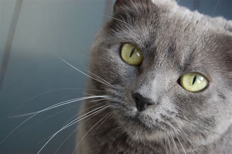 name for grey cat movie search engine at search com