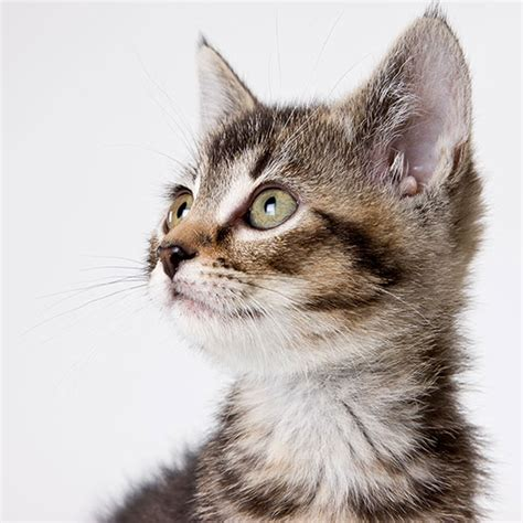 8 Reasons Cats Make Great Companions by Pet Smarts 8 Reasons A Or Cat Is For Your