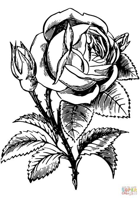 Desenhos Para Colorir De Rosa - Coloring City