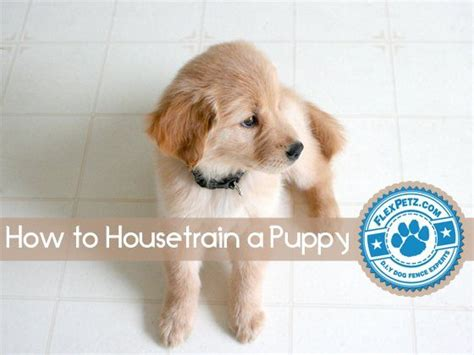 how to housetrain a puppy how to housetrain a puppy