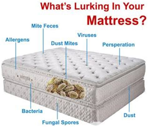 what to look for in a mattress maple ridge mattress cleaning