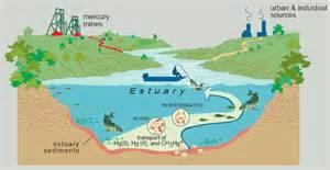 aquatic ecosystems aquatic ecosystems estuaries