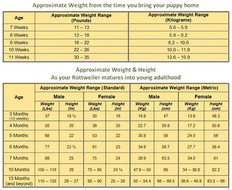 weight of rottweiler rottweiler growth chart what to expect as your rottie grows up