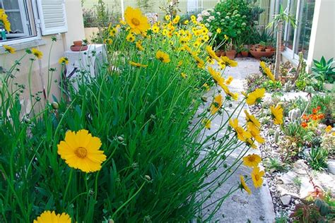 plants that don t need water saving water in the garden