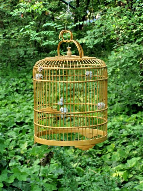Bird Cage Stock Images Image 24110704 Free Bird Cage Stock Photo Freeimages Com