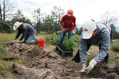 www conafor gob mx list de beneficiarios 2016 alcanza durango 60 de la meta de reforestaci 243 n comisi 243 n