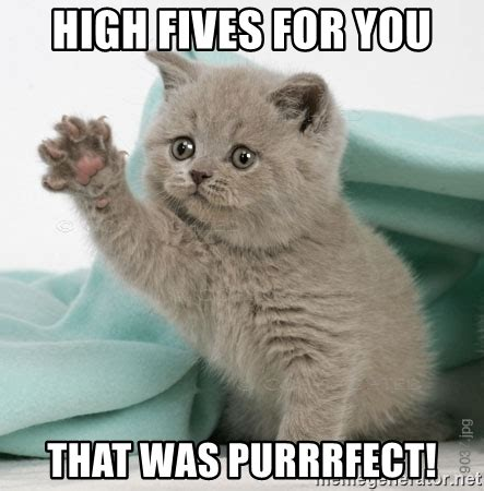 Purrrfect Meme - high fives for you that was purrrfect high five kitten