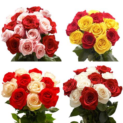 different colors of roses globalrose fresh 50 assorted roses 2 different colors 50