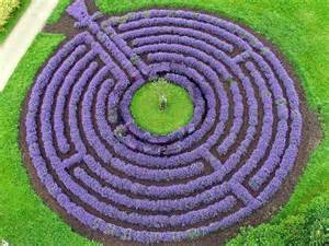 Lavender Labyrinth | lavender as hedging plants the garden of eaden