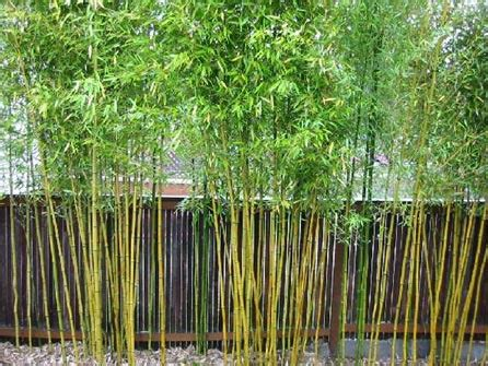 bamboo ideas for backyard garden plot bamboo lawyers and bare spots wtop