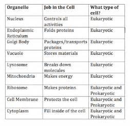 prokaryotic and eukaryotic cell worksheet worksheets for