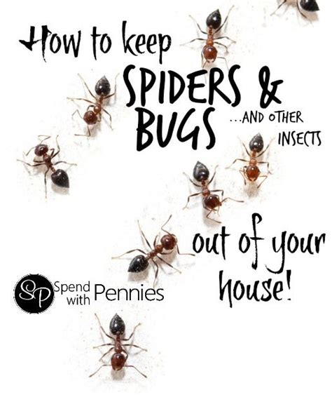 how to keep spiders out of the house how to keep spiders bugs other common insects out of your house
