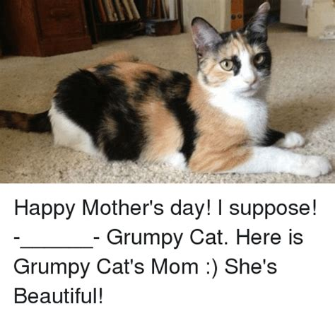 Cat Mom Meme - 25 best memes about grumpy cat and mother s day grumpy