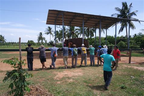 Stem Mba by Visit To Elephant Rescue Center Best Solutions To