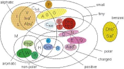 venn diagram properties venn diagram grouping amino acids by common physico che