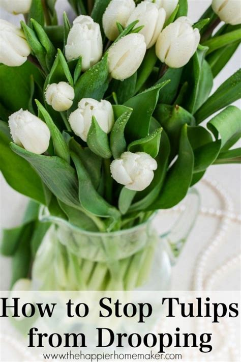 How To Keep Tulips Fresh In A Vase by Fleurs Picmia