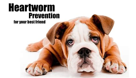 heartworm prevention heartworm prevention