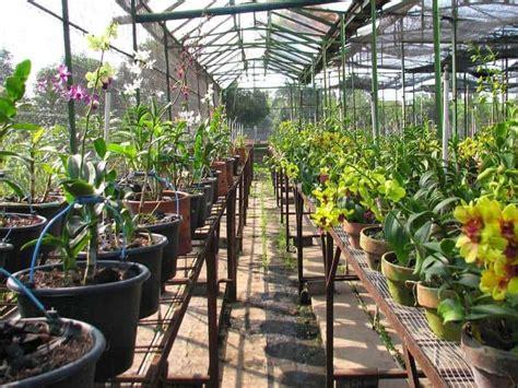 Bucephalandra Kota Batu Tanaman Hias Aquascape usaha tanaman sayuran bibit