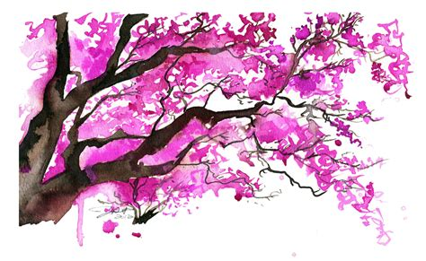 japanese cherry blossom tree watercolor japanese cherry blossom tree by jessicaillustration