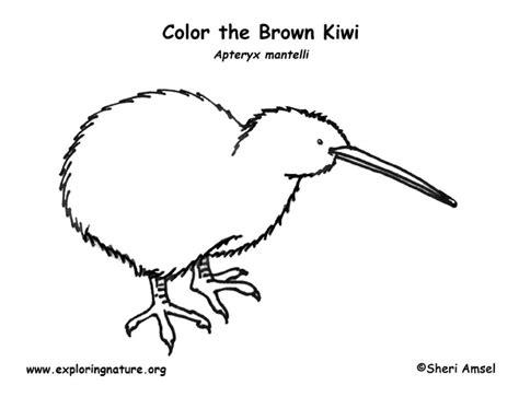 kiwi brown coloring page