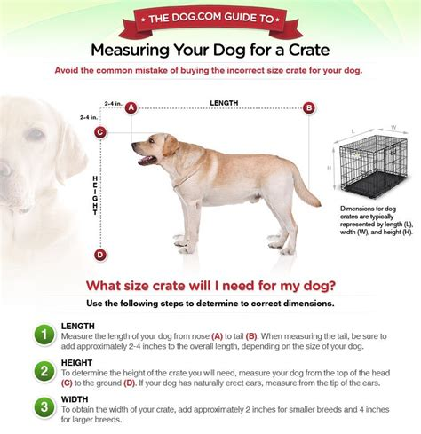 how to kennel your puppy how to measure your aussiedoodle and labradoodle