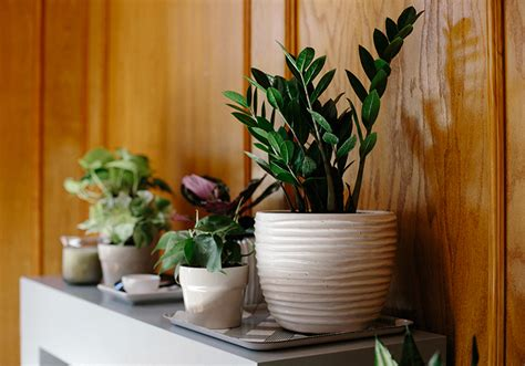 small low light plants the best 28 images of small low light plants 23 easy to