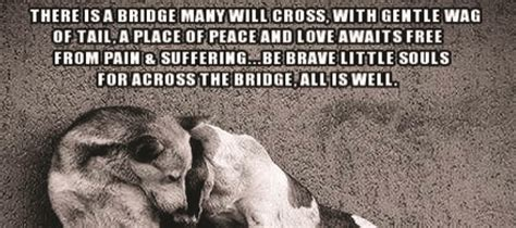 quotes about dogs dying quotes about your dying quotesgram