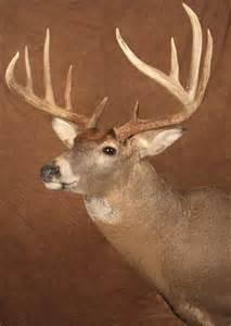 Deer Head Deer Heads