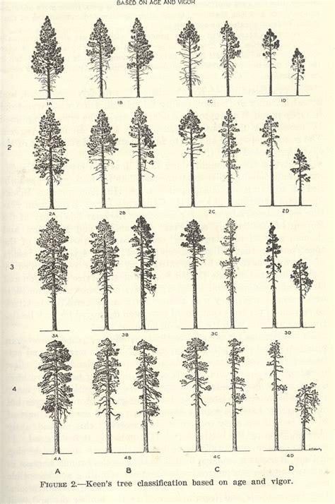 tree silhouette tattoo best 25 pine ideas on pine tree pine