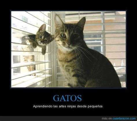 google imagenes de gatos m 225 s de 1000 im 225 genes sobre gatos kukis en pinterest