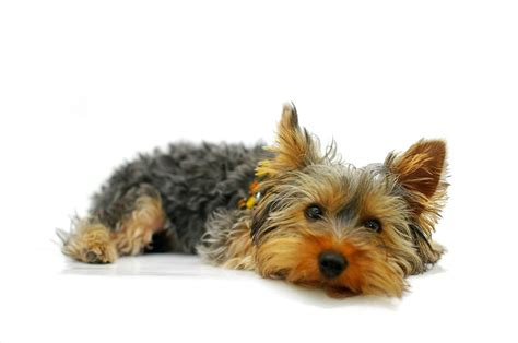 best house dogs for kids top 25 best dog breeds for kids browse read