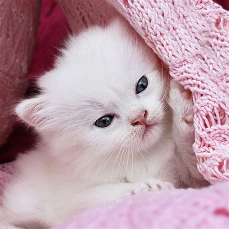cute kitty wallpapers hd cat kitten pictures  utpal