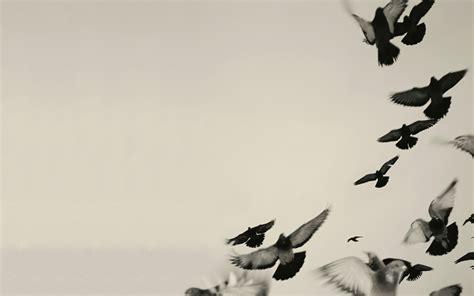 black  white bird wallpaper  wallpapersafari