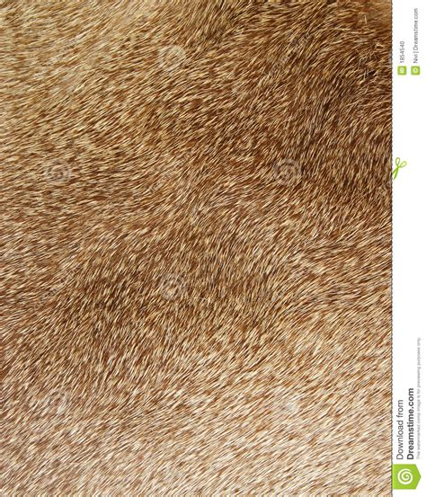 z pattern hair texture fur texture stock photo image of pattern wild mammal