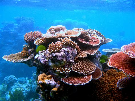 Coral Reef L by Beyond Gorgeous Great Barrier Reef 46 Pics