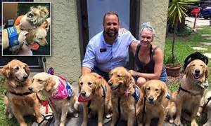 meet the adorable comfort dogs who flown from all