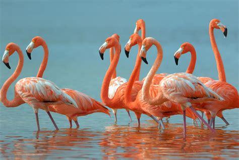 wallpaper flamingo flamingo desktop wallpaper hd wallpapers ololoshenka